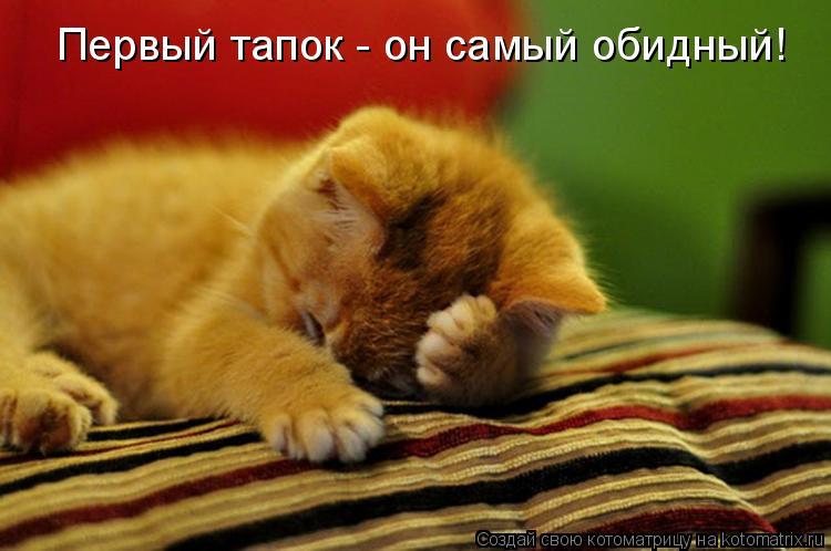 коты пушистые шкоды